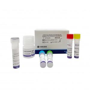 COVID-19 nucleic acid detection kit