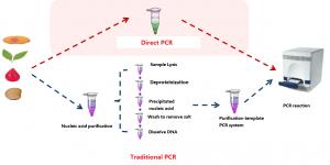 Direct PCR